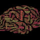 Artificial Intelligence Translates Brain Activity Into Words - YellRobot