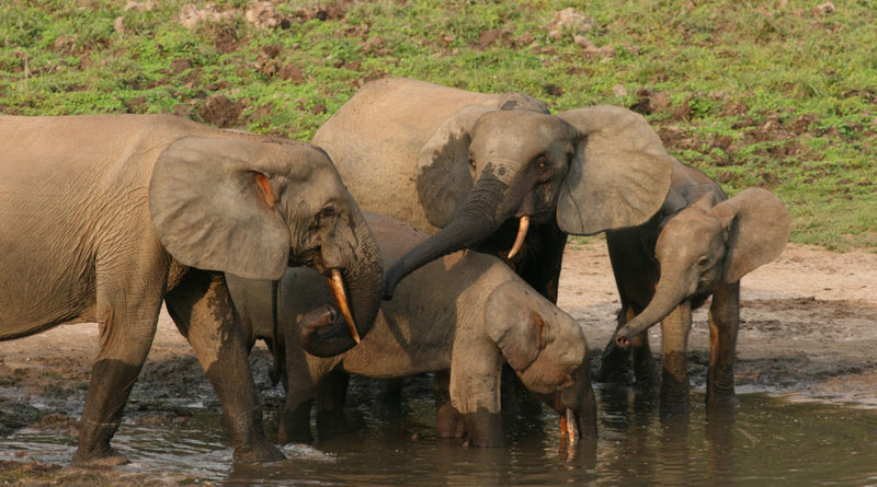 Elephant Listening Project artificial intelligence sounds Conservation Metrics - YellRobot