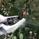 Raspberry Picking Robots England - YellRobot