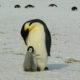 Intel Using AI To Save Penguins Antartica - YellRobot